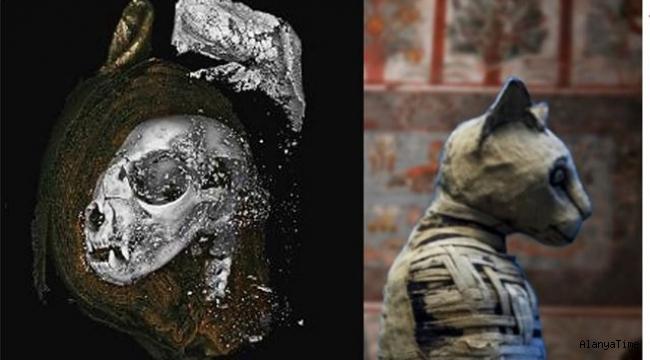 Bilim adamları 3D taramalar kullanarak eski Mısır'ın mumyalanan hayvanları hakkında yeni bilgiler ediniyorlar.